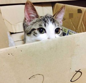 chat-cacher-carton